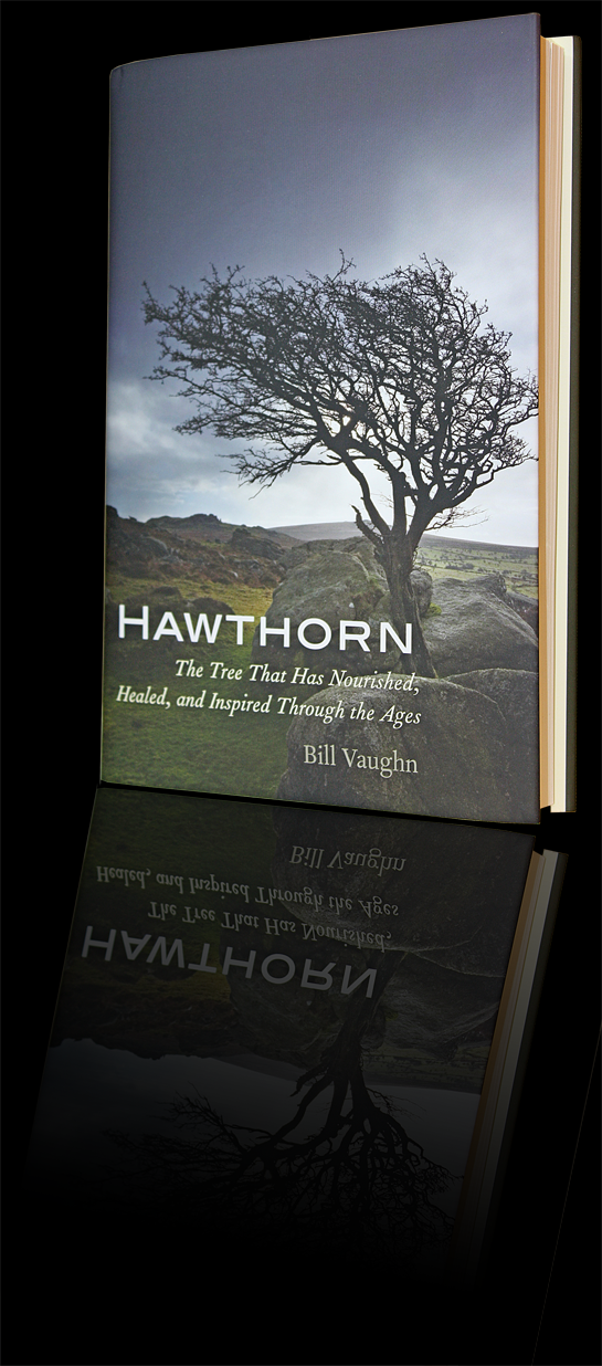 Hawthorn, by Bill Vaughn
